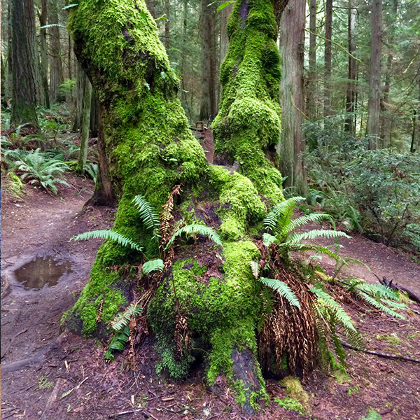 Grand Forest Bainbridge Island Photos Videos