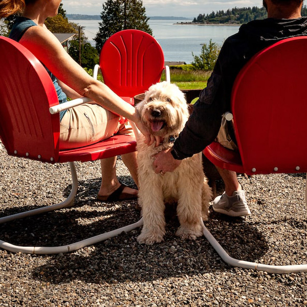 Happy Dog Rich Passage Bainbridge Island