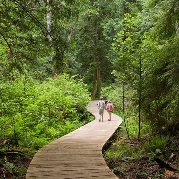 Forest Sky Trail Bainbridge Island Play